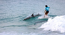 Mele Sali surfing with dolphins in Noosa by Chrystal Fitzgerald